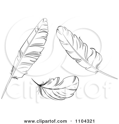 Clipart Three Black And White Bird Feathers - Royalty Free Vector Illustration by Vector Tradition SM
