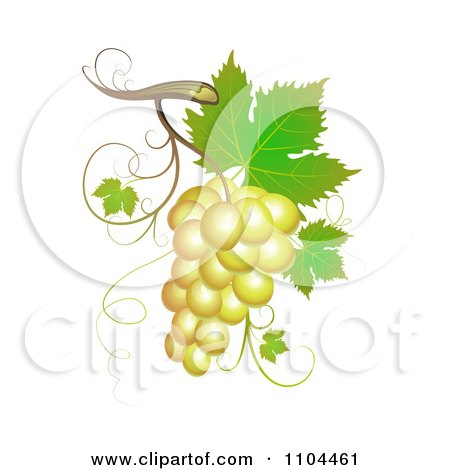 Clipart White Winery Grapes With Leaves And Tendrils - Royalty Free Vector Illustration by merlinul