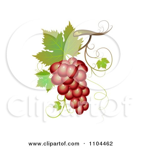 Clipart Red Winery Grapes With Leaves And Tendrils - Royalty Free Vector Illustration by merlinul