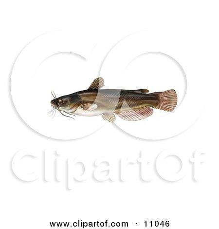 Clipart Illustration of a Yellow Bullhead Catfish (Ameiurus natalis) by JVPD