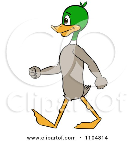 Clipart Mallard Duck Standing And Walking Upright - Royalty Free Vector Illustration by Cartoon Solutions