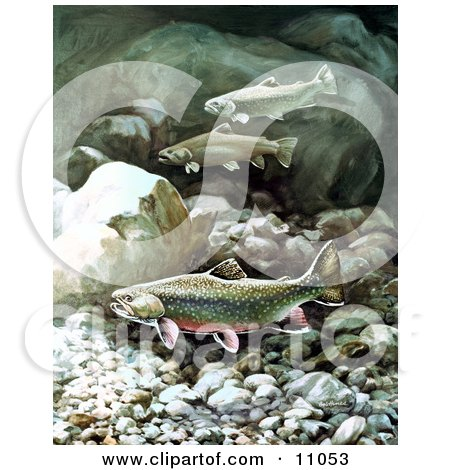 Clipart Illustration of Brook Trout Fish Swimming on a Rocky Bottom by JVPD
