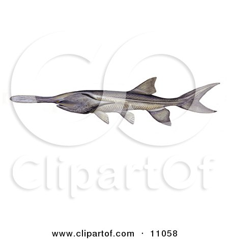 Clipart Illustration of an American or Mississippi Paddlefish (Polyodon spathula) by JVPD