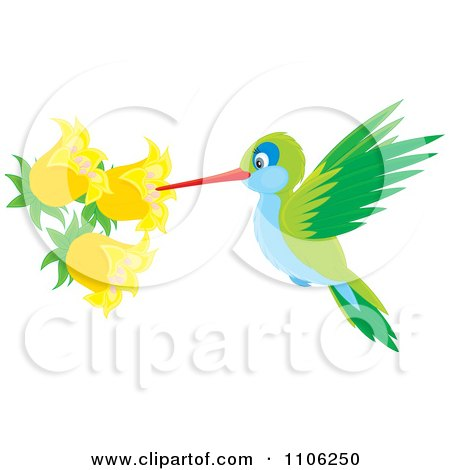 Clipart Green And Blue Hummingbird Sucking Nectar From Yellow Bell Flowers - Royalty Free Vector Illustration by Alex Bannykh