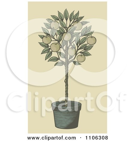 Clipart Woodcut Styled Potted Apple Tree - Royalty Free Vector Illustration by Any Vector