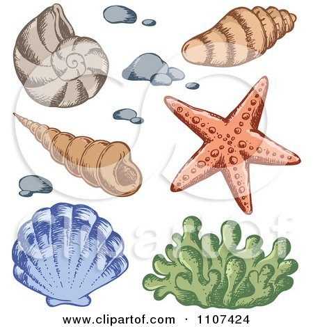 Clipart Sketched Sea Shells And Coral - Royalty Free Vector Illustration by visekart