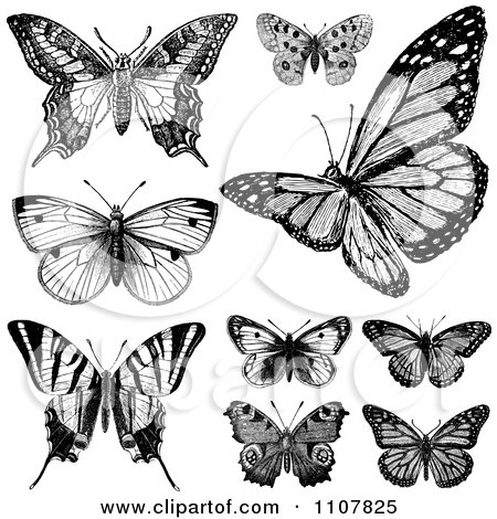 c12a37372 Retro Black And White Vintage Butterflies 1 Posters, Art Prints by ...