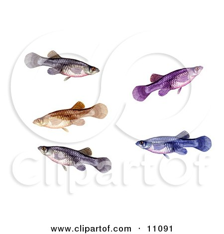 Clipart Illustration of a Group of Swimming a Mosquitofish (Gambusia affinis) by JVPD