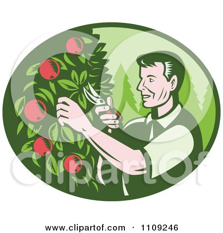 Clipart Retro Woodcut Farmer Pruning Apple Trees In An Orchard - Royalty Free Vector Illustration by patrimonio