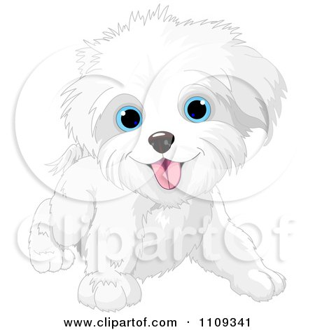 Clipart Cute Playful Bichon Frise Or Maltese Puppy Dog - Royalty Free Vector Illustration by Pushkin