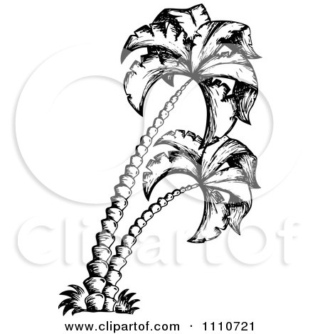Palm Tree Tattoos Black And White White Sketched Palm Trees