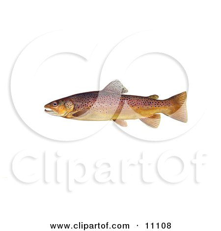 Clipart Illustration of a Brown Trout Fish (Salmo trutta) by JVPD