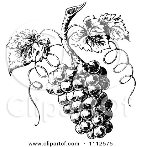 Clipart Vintage Black And White Grapes On The Vine - Royalty Free Vector Illustration by Prawny Vintage
