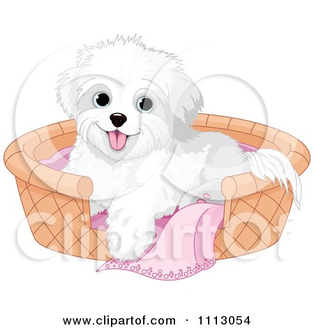 Clipart Cute Bichon Frise Maltese Puppy Dog In A Basket Bed - Royalty Free Vector Illustration by Pushkin