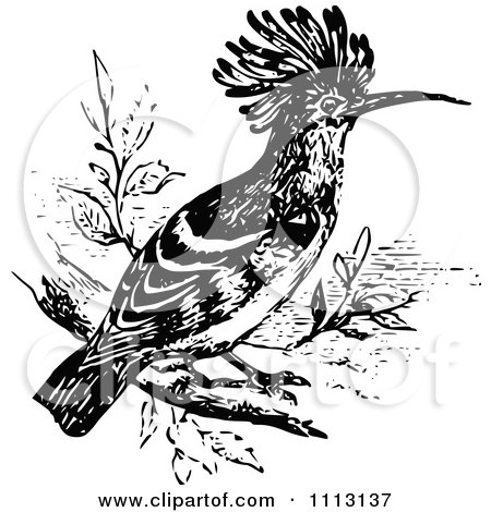 Clipart Vintage Black And White Hoopoe Bird - Royalty Free Vector Illustration by Prawny Vintage
