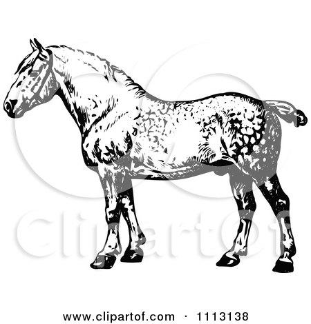 Clipart Vintage Black And White Percheron Horse - Royalty Free Vector Illustration by Prawny Vintage