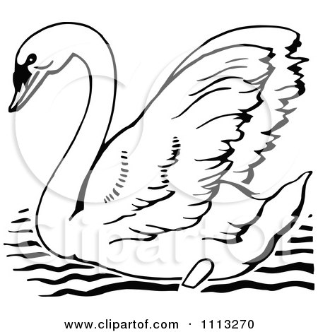 Free Swan Pictures