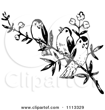 Three Vintage Black And White Birds On A Branch Poster Art Print 1113329