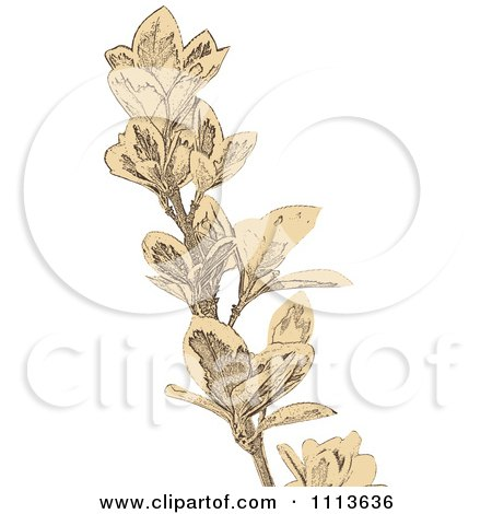 Clipart Sepia Sketched Branch - Royalty Free Vector Illustration by Andrei Marincas