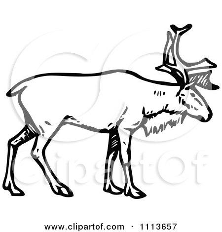 Clipart Vintage Black And White Stag Deer - Royalty Free Vector Illustration by Prawny Vintage