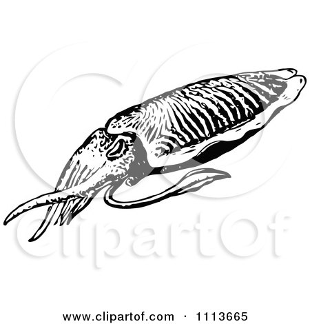 Clipart Vintage Black And White Squid - Royalty Free Vector Illustration by Prawny Vintage