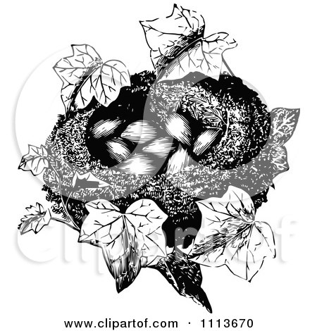 Clipart Vintage Black And White Bird Nest With Eggs And Ivy - Royalty Free Vector Illustration by Prawny Vintage