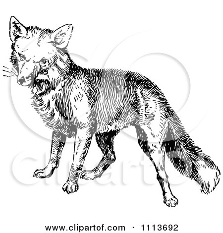 Clipart Vintage Black And White Fox - Royalty Free Vector Illustration by Prawny Vintage