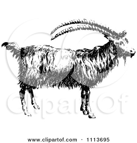 Clipart Vintage Black And White Goat In Profile - Royalty Free Vector Illustration by Prawny Vintage