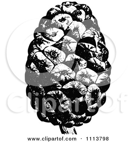 Clipart Vintage Black And White Stone Pine Cone - Royalty Free Vector Illustration by Prawny Vintage