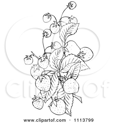 royalty free rf clipart of strawberry plants illustrations