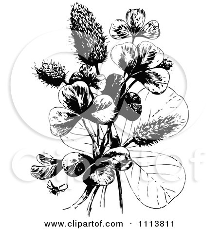 Clipart Retro Black And White Bee And Clover Plant Royalty Free Vector Illustration