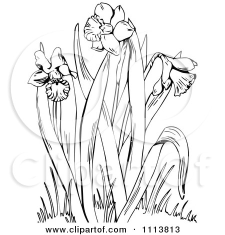 Clipart Retro Black And White Flowering Daffodil Plant ...