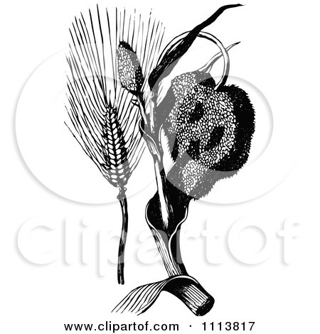 Clipart Vintage Black And White Corn Ear And Plant - Royalty Free Vector Illustration by Prawny Vintage