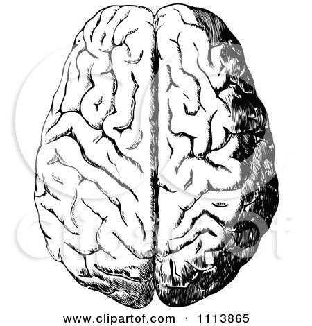 Clipart Vintage Black And White Human Brain 1 - Royalty Free Vector Illustration by Prawny Vintage