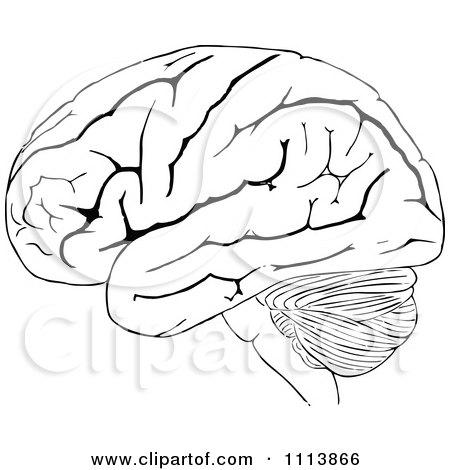 Human Brain Black And White Vintage Black And White Human
