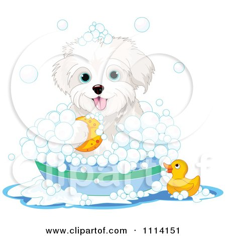 Clipart Cute Bichon Frise Maltese Puppy Bathing With A Duck And Bubbles - Royalty Free Vector Illustration by Pushkin