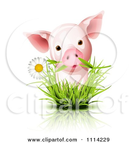 Clipart Cute Piglet With A Daisy In Grass - Royalty Free Vector Illustration by Oligo