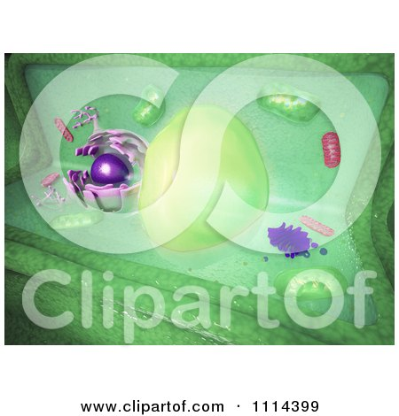 Clipart 3d Plant Cell - Royalty Free CGI Illustration by Mopic