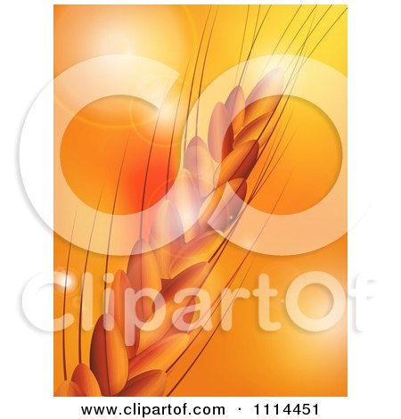 Clipart Closeup Of Wheat Over Orange With Flares Of Light - Royalty Free Vector Illustration by elaineitalia