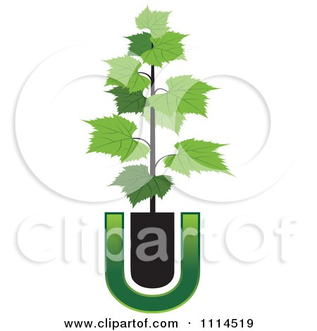 Clipart Potted Grape Vine And Letter U - Royalty Free Vector Illustration by Lal Perera