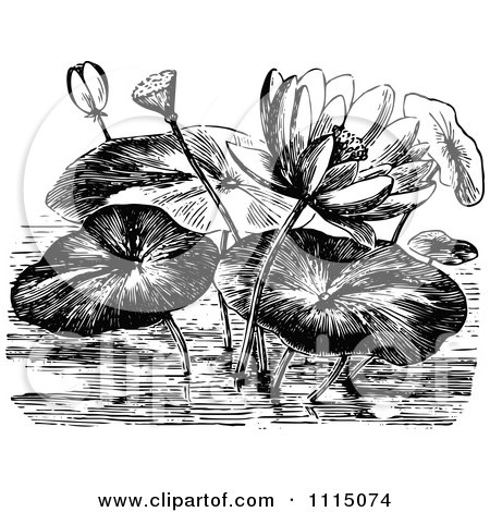 Clipart Vintage Black And White Water Lily Flowers And Pads - Royalty Free Vector Illustration by Prawny Vintage