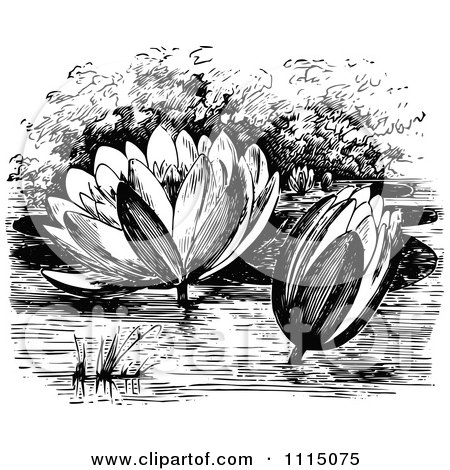 Clipart Vintage Black And White Water Lily Flowers - Royalty Free Vector Illustration by Prawny Vintage
