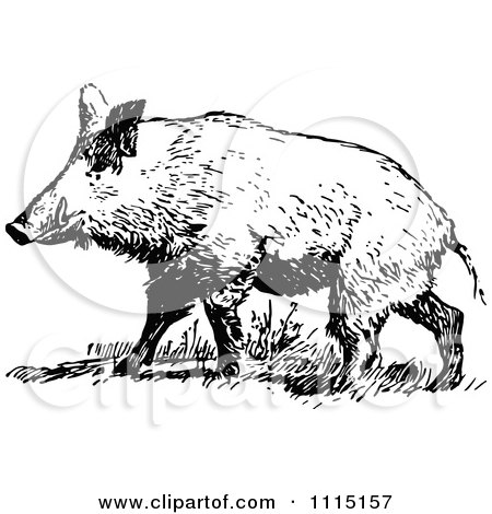 Royalty-Free (RF) Wild Hog Clipart, Illustrations, Vector Graphics #1