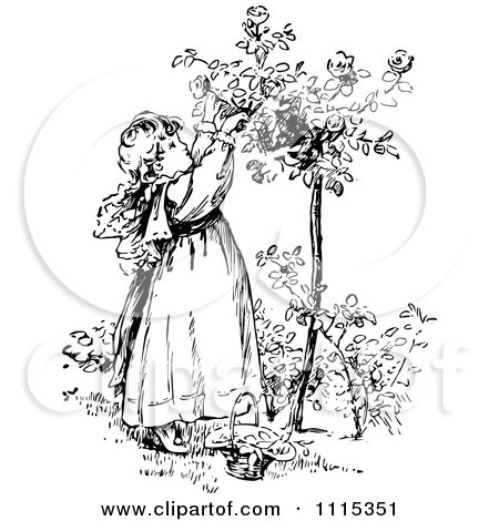 Clipart Vintage Black And White Girl Picking Flowers From A Shrub 2 - Royalty Free Vector Illustration by Prawny Vintage