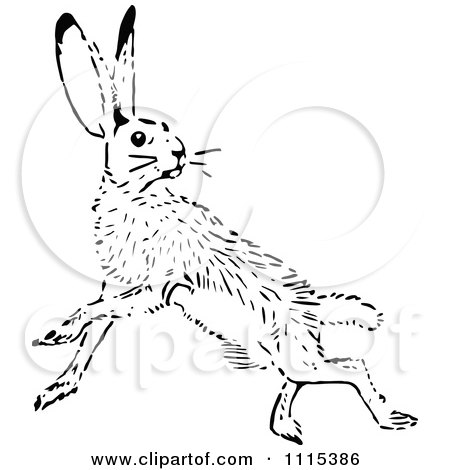 Black tailed jackrabbit coloring page coloring pages for Jack rabbit coloring page