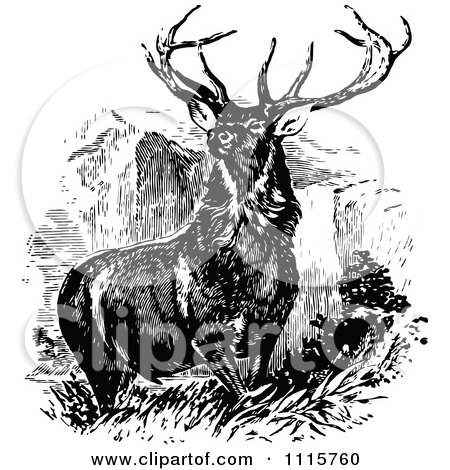 Clipart Retro Vintage Black And White Stag Buck Deer With Antlers 1 - Royalty Free Vector Illustration by Prawny Vintage