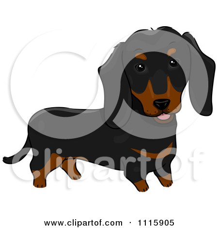 Clipart Cute Black And Brown Dachshund Dog - Royalty Free Vector Illustration by BNP Design Studio