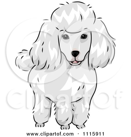 Clipart Cute White Poodle Dog - Royalty Free Vector Illustration by BNP Design Studio