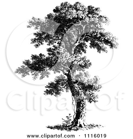 Clipart Retro Vintage Black And White Tree 7 - Royalty Free Vector Illustration by Prawny Vintage