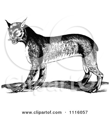 Clipart Retro Vintage Black And White Bobcat - Royalty Free Vector Illustration by Prawny Vintage